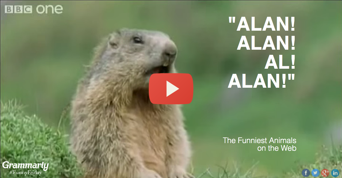 funny animals, BBC, Grammarly, language, English, speaking