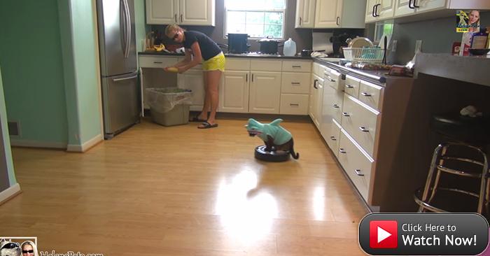 Cat ins shark suit rides vacuum.